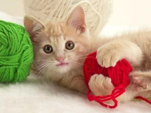 playful mèo con