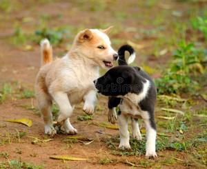 playful पिल्लें