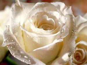 pretty hoa