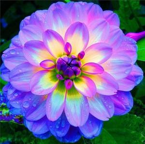 pretty Bunga