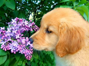puppies and flowers