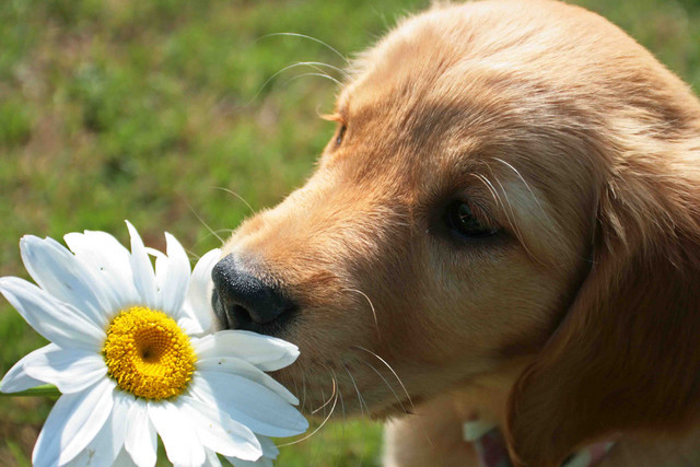 Cute Puppies Images Puppies And Flowers Wallpaper And Background