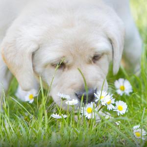 cachorritos and flores