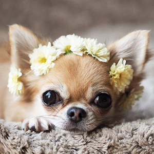 цветок girl
