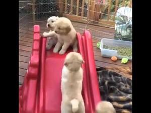 mtoto wa mbwa on the slide