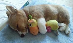 tuta sleeping with stuffed mga hayop