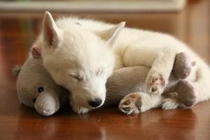 cachorritos sleeping with stuffed animales