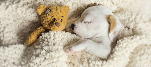 Cuccioli sleeping with stuffed animali