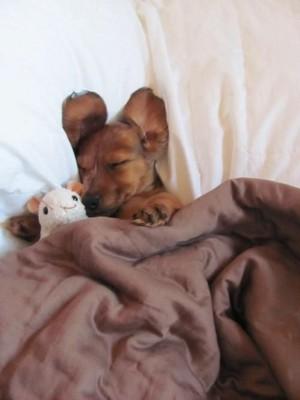 mtoto wa mbwa sleeping with stuffed wanyama
