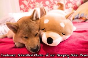 chó con sleeping with stuffed động vật