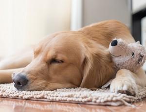 chó con sleeping with stuffed động vật