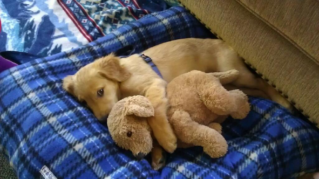 Greyswan618 Images Puppies Sleeping With Stuffed Animals Hd
