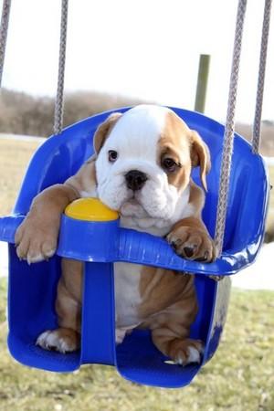 कुत्ते का बच्चा, पिल्ला playtime