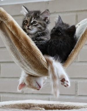 sleeping kitties