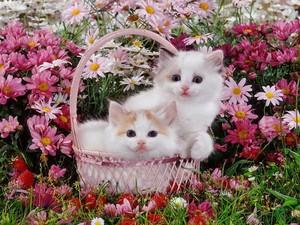 sweet and adorable kitties