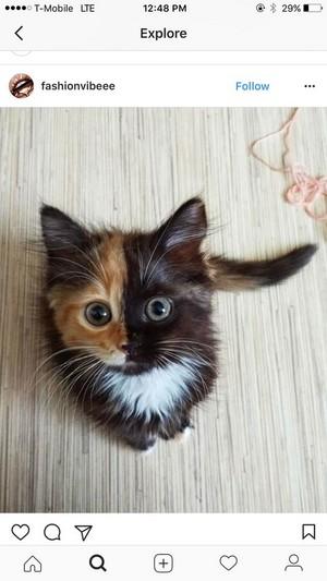 sweet kitties