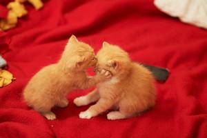 sweet kitty kisses