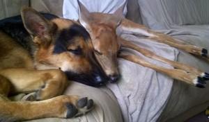 unlikely animal buddies