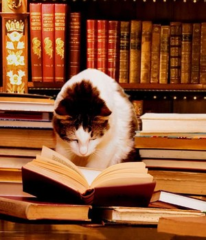 A cat reading