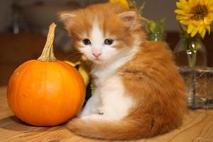Autumn Pusa 🍂