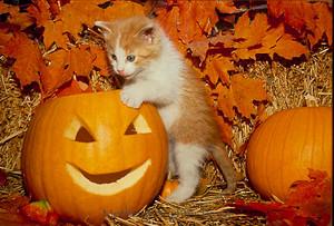 Autumn ネコ 🍂
