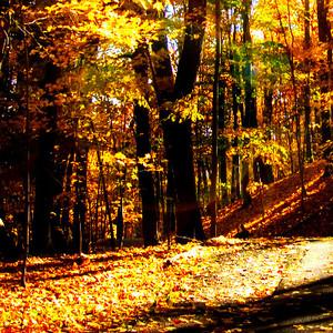 Autumn Фан Art