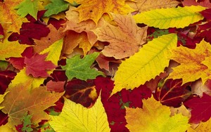 Autumn wolpeyper