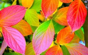 Autumn Обои