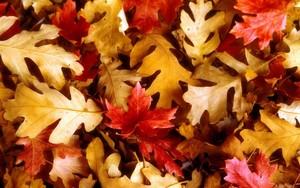 Autumn hình nền