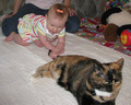 Babysitting  - cats photo