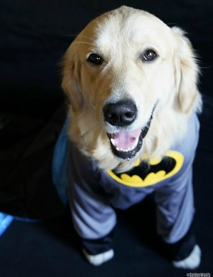 Batman The Bark Knight
