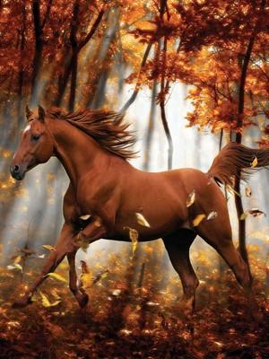 Beautiful Autumn Horse 🍂