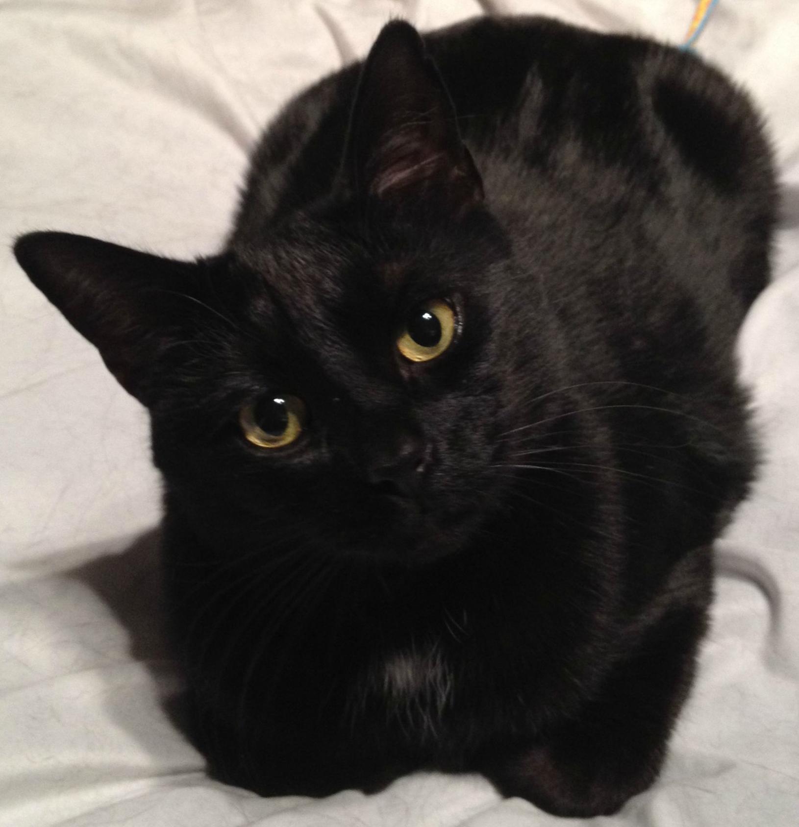 Cherl12345 Tamara Bilder Beautiful Black Cat Hd Hintergrund And