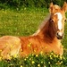 Beautiful Horse - remy_46 icon
