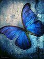Butterfly - butterflies photo