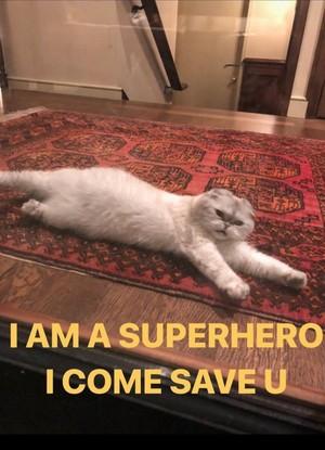 CAT OLIVIA MEME