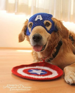 Captain America The First Dog Avenger