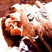 Carrion Death - tales-from-the-crypt icon