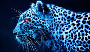 Cool Cheetah cheetah 37633431 300 173