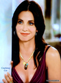 Courteney Cox  - cougar-town fan art