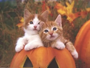 Cute Autumn Kittens 🍂