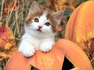 Cute Autumn Kitty 🍂