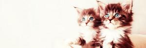 Cute Kitten Banner