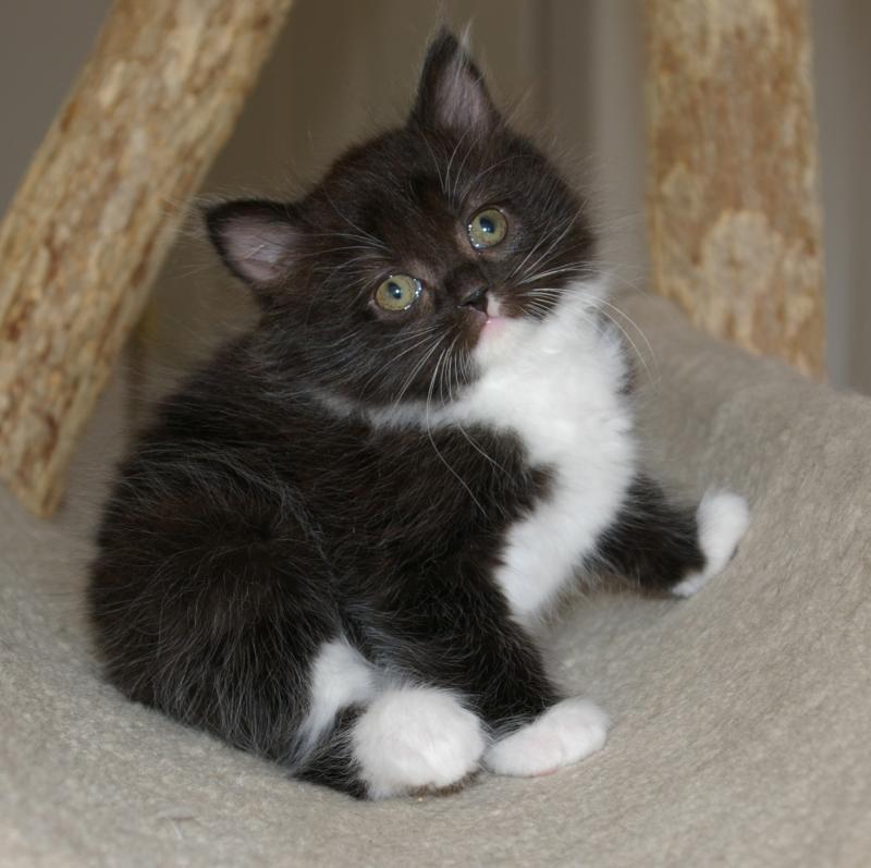 Cute Little Kitten Kittens Photo 41503417 Fanpop