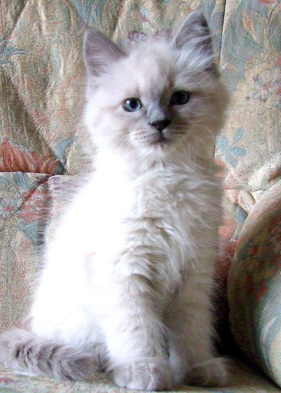 Kittens Images Cute Little Kitten Hd Wallpaper And Background Photos