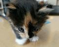 Cute Little Kitten  - kittens photo