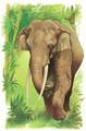 Elefante asiatico - elephants photo