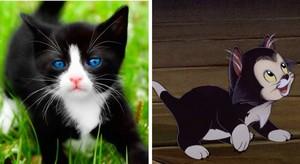 Figaro's Twin