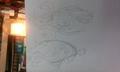 Genie evos - mariposa-region-rpg photo