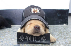 K-9 pups in training